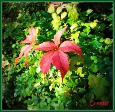 Instant d'oct feuilles